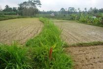 Tanah cantik View Sungai dan Tebing di Ubud Payangan LUBD677