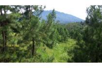 Tanah 7.200m di Bogor (Puncak), Cisarua Villa Lody - dekat Vimala Hills