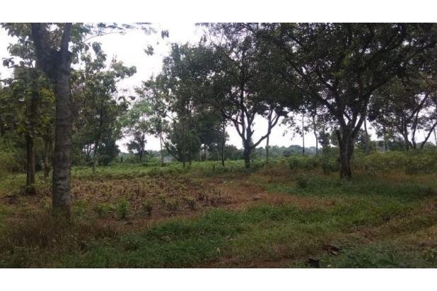 Rp128mily Tanah Dijual