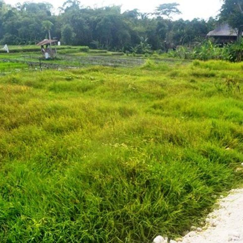 Tanah Murah view sawah lingkungan villa di Canggu Brawa  CGA227