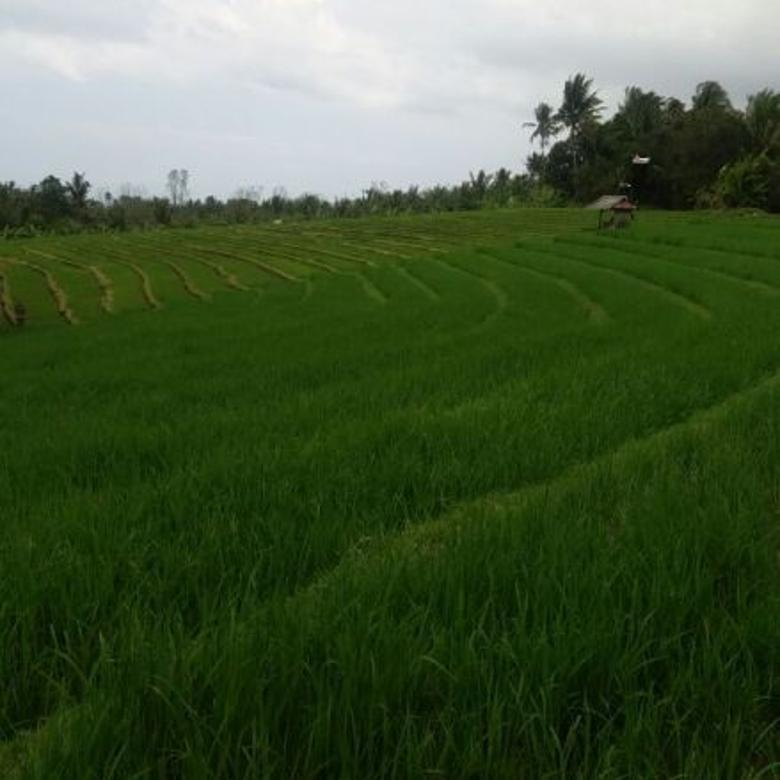 Tanah murmer di Tabanan