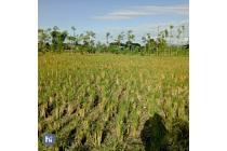48 are tanah dekat jalan bypass Lombok tengah T289