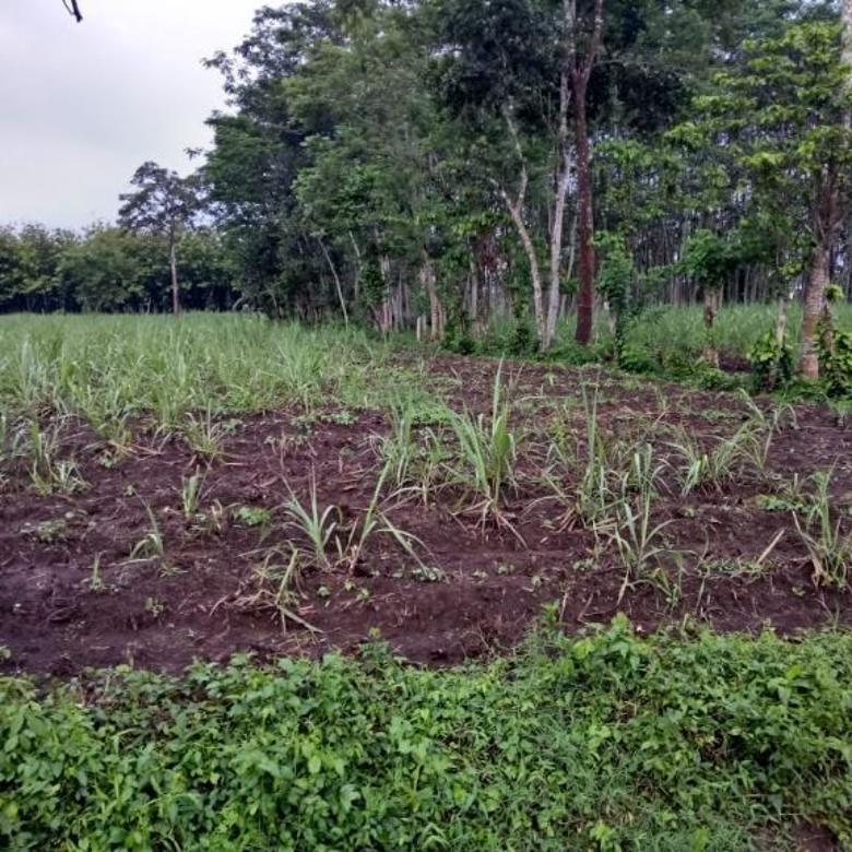 Tanah luas dan murah di Banjar Arum Singosari