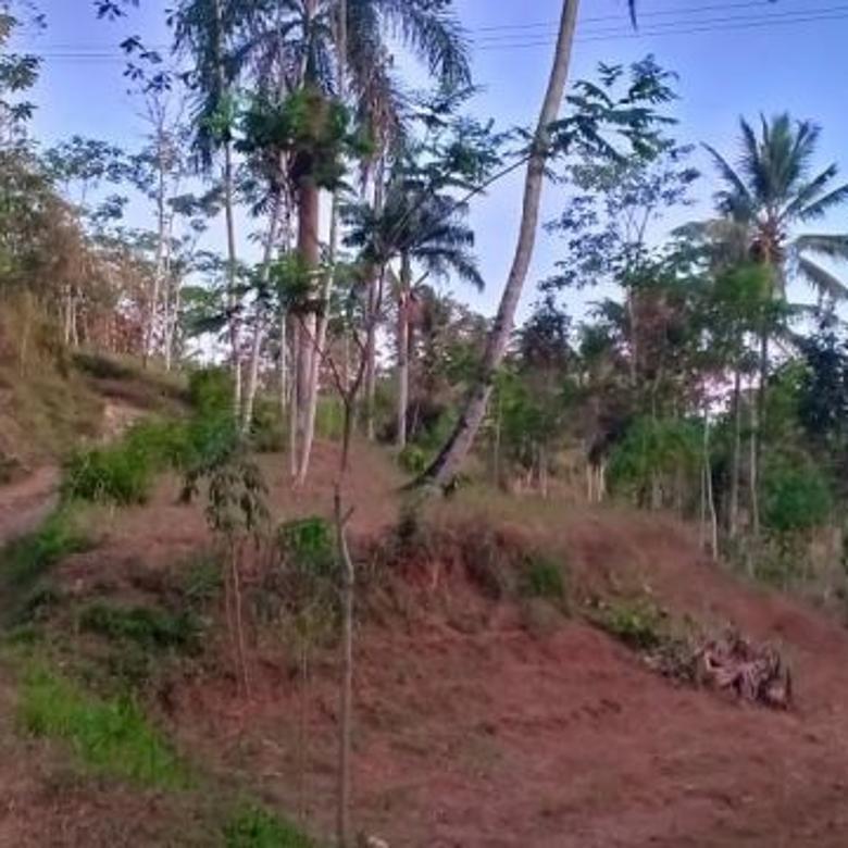 Tanah 2,2 Ha harga murah di Jabung Pakis Malang