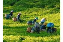 Dijual Tanah Kavling Murah di Cianjur - Investasi Terbaik Masa Depan