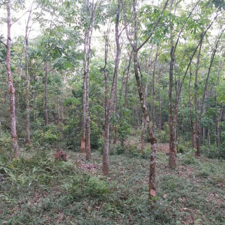 4600m2.SHM Tanah di Kec.Jasinga Kab.Bogor