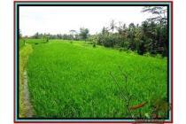 Strategis Super Prospektif Tanah 1.000 m2 di Ubud Tegalalang E478