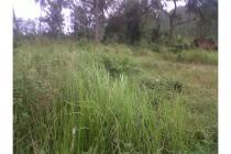 Tanah 3500m cocok investasi  ternak, kebun, PALAS Pekanbaru.