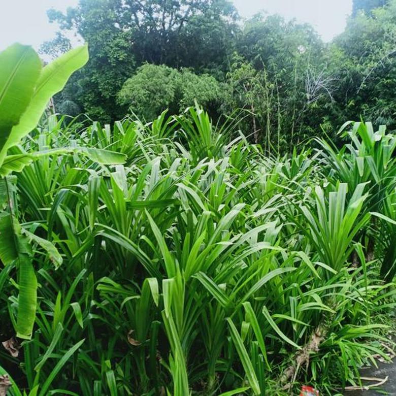 Tanah 5 are di area Muding dkt Gatsu,Kerobokan,Dalung