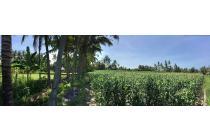 Tanah di Saba cocok untuk Villa, perumahan, Hotel.