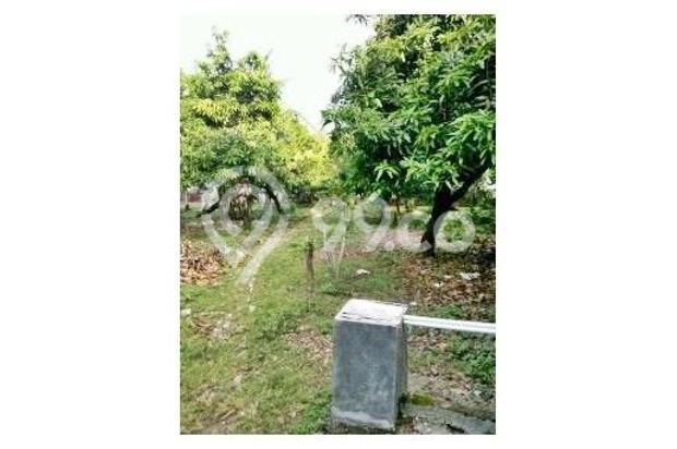 Dijual Rumah Pinggir Jalan Utama di Cilamaya Karawang 11064364