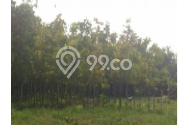 Tanah murah cocok utk perumahan di Mojorejo Batu 12272566