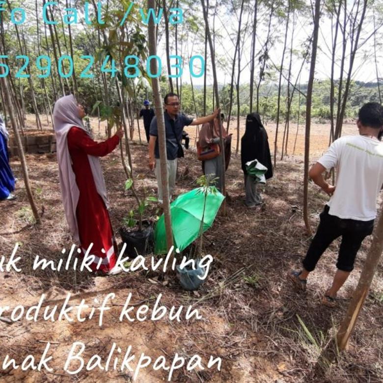 Kavling Produktif Kavling Kebun Ternak Lamaru