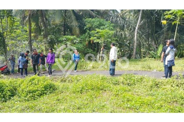 Rumah Baru Sangat Murah di Mengwi Dekat Taman Ayun 16893644