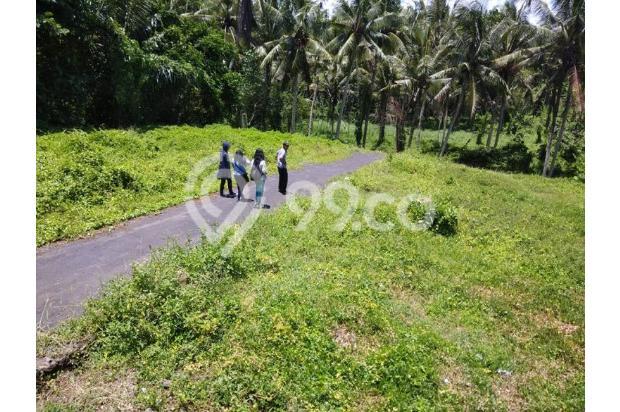 Rumah Baru Sangat Murah di Mengwi Dekat Taman Ayun 16893646