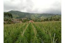 Dijual Tanah Sangat Subur di Cikole Lembang