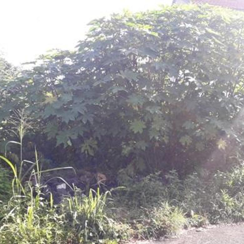 Tanah Kavling dalam Ringroad dekat TVRI & JCM Jalan Magelang km 4