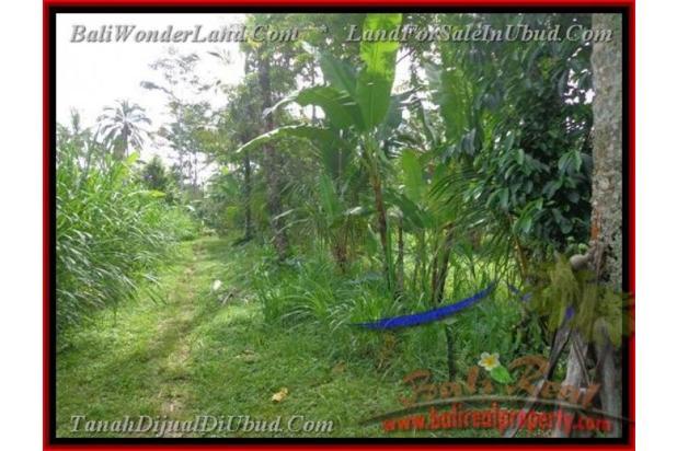Exotic, 2.200  m2 View Kebun alami 2178122
