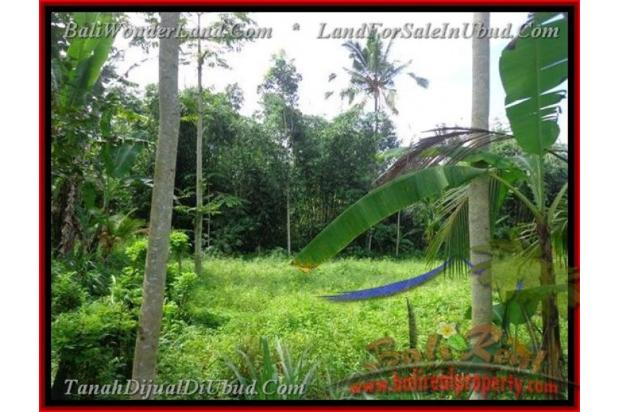 Exotic, 2.200  m2 View Kebun alami 2178123