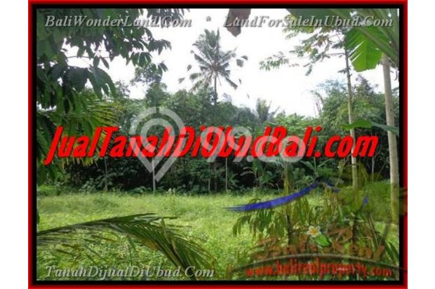 Exotic, 2.200  m2 View Kebun alami 2178125