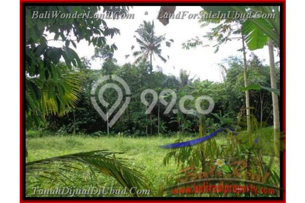 Exotic, 2.200  m2 View Kebun alami 2178127