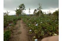 Tanah-Buleleng-3
