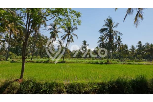 Bondowoso botolinggo tanah dijual cepat 17994998
