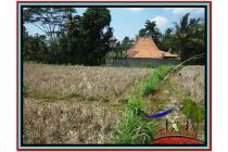 Super Langka Potensial Tanah 2.000 m2 Sentral Ubud YUB524