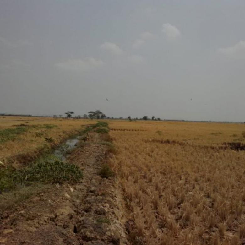 Tanah Sawah Strategis Untuk Pertanian  Dekat Jalan Kamplong .