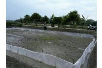 Bissmillahirohmanirrohim,   Dijual Lahan Sawah Lokasi Kec. Kapas Bojonegoro