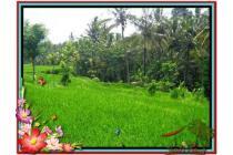 Murah Strategis 1.000 m2  View Sawah di Ubud TJUB478