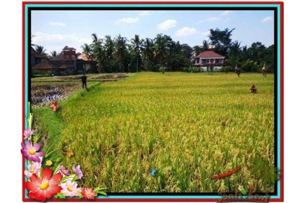 Investasi Properti Strategis 1.500 m2  View Sawah di Sentral Ubud TJUB508 4291900