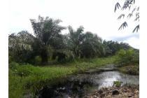 Kebun Kelapa Sawit & Tanah Siap Tanam  38 ha dekat Pontianak (Rp 15.000/m2)