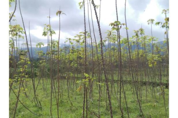 Tanah bogor lokasi strategis dekat kecamatan tenjolaya luas 2800 Meter 9586631