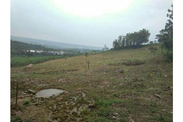 Tanah kavling seharga MOTOR, Investasi Kebun Buah BOGOR 16845024