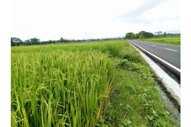 Invest Tanah di 2km Exit Tol Klaten, Cicil 12x Tanpa Bunga 17793815