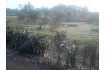 Sawah Pinggir Jalan Desa Pemandangan bagus Udara Sejuk