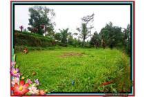 Properti Strategis 2.200 m2  View Sawah di Ubud TJUB480