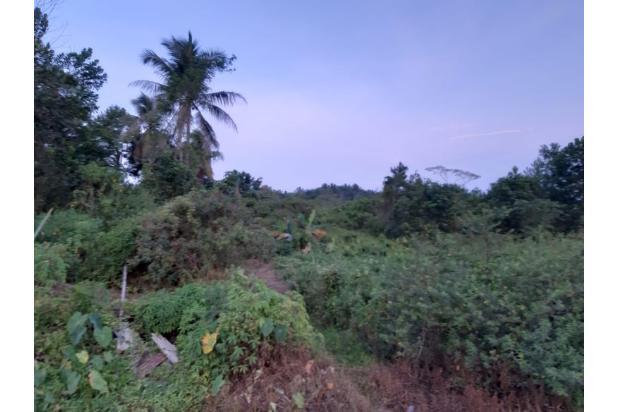 Rp31,2mily Tanah Dijual