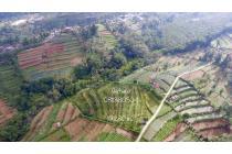 Dijual tanah 10,280 m2, Taman Tanda - Baturiti, Bali , milik Ibu saya