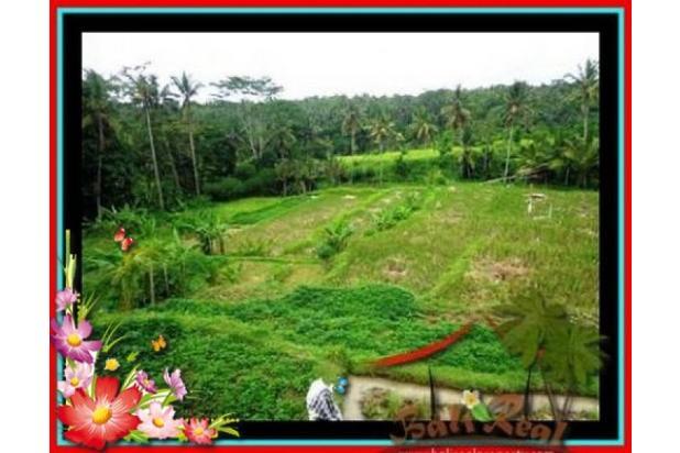 Rp95mily Tanah Dijual