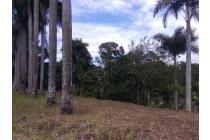 Tanah-Bogor-20