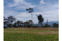 Tanah-Bogor-18