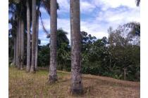 Tanah-Bogor-21