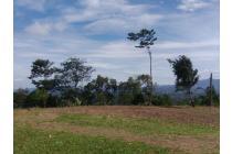 Tanah-Bogor-17
