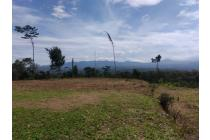 Tanah-Bogor-15