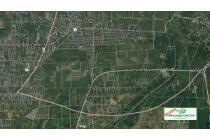 Tanah Dijual jalan Batang Kuis Sumatera Utara hks6071