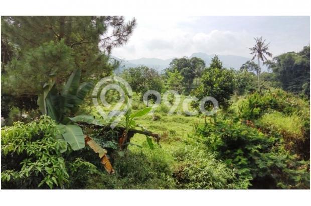 Tanah bagus seluas = 7,000M2 (Cilember-Cisarua) 7670176