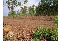 Uang Anda Bingung Untuk Di Tabung Di mana Pilih Tanah Kavling
