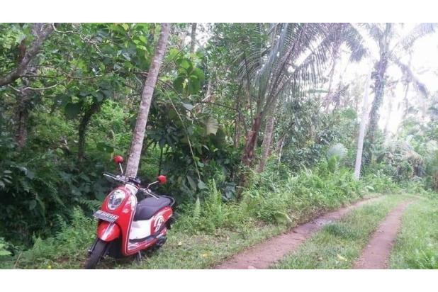 Tanah Kebun / tegalan Manikyang Selemadeg tabanan 15789181